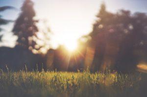 Solen strålar över gräs