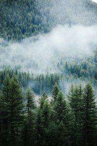 Foto på en skog i dimma