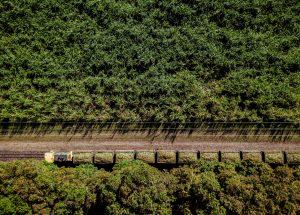 Foto på ett grönt växtrikt landskap, taget uppifrån. Man ser en tågvagn fullastad med växter/hö
